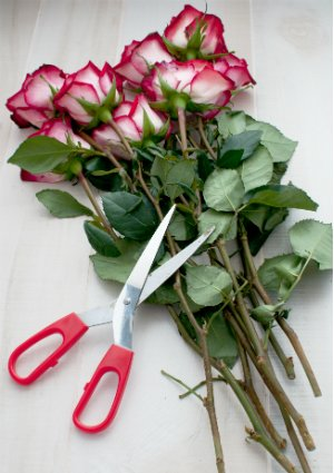 Different Freshly Cut Flowers that Last Longer for Your Online Flower Shopping