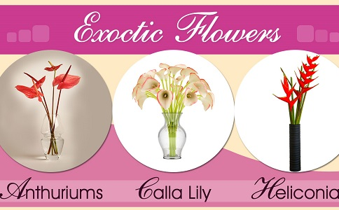 Different Types of Exotic Flowers for Gifts and Decorations