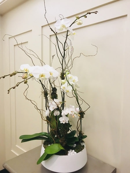 shop 4 stem white phalaenopsis orchid delivery